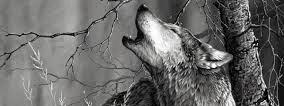 Loup article